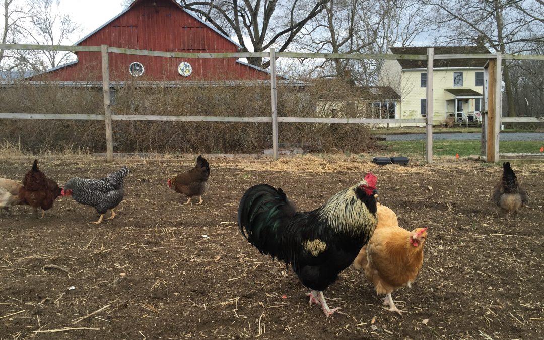 Heather's Five Favorite Farm Fresh Egg Recipes